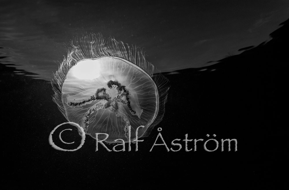 Photo_seminar_Ralf_Astrom