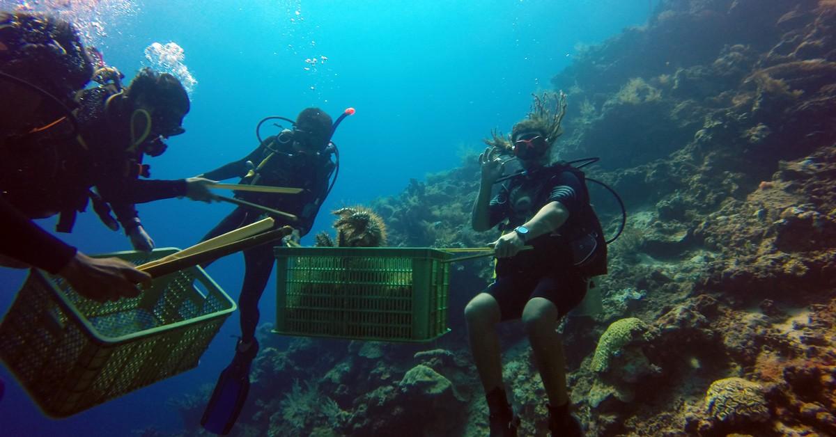 Divers at Living Colours Bunaken National Park