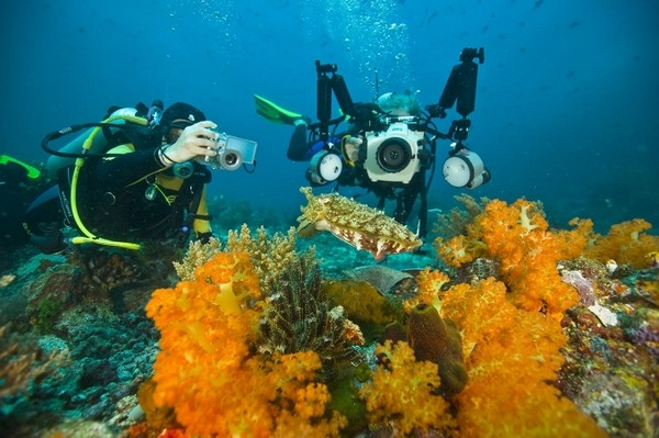 Excellent underwater photographing at Bunaken and Manado